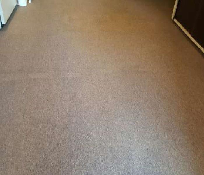 Carpet Cleaning After Water Damage Before